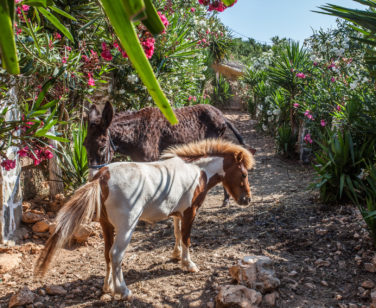 Holiday Village in Crete Bali - Stone Village - Farm Animals