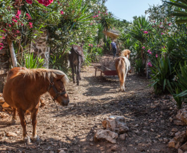 Hotel in Bali Crete - Stone Village - Farm Animals 1