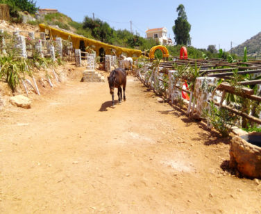 Hotel in Bali Crete - Stone Village - Farm Animals 10