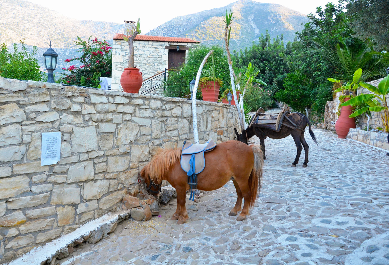 Hotel in Bali Crete - Stone Village - Farm Animals 11