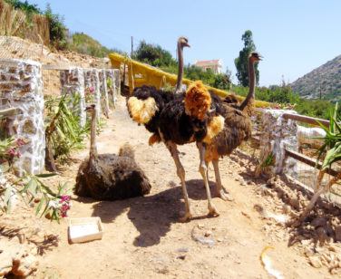 Hotel in Bali Crete - Stone Village - Farm Animals 9